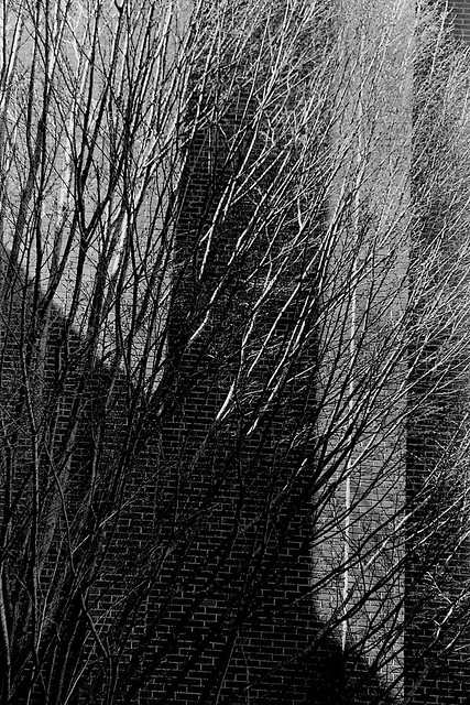 Branch Abstract