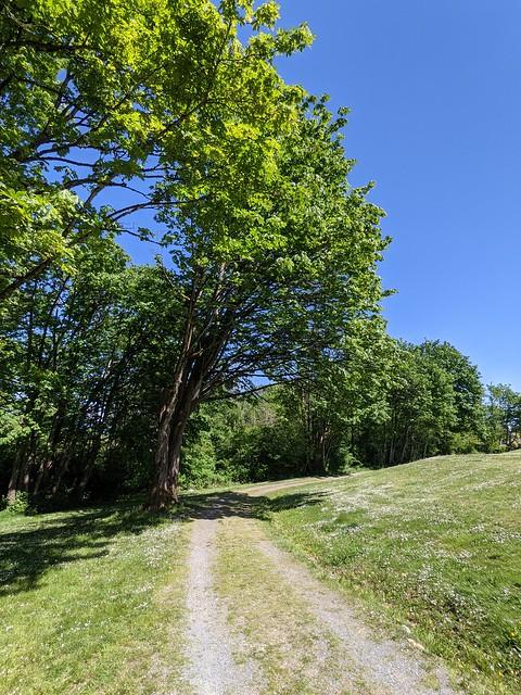Forest Glen Park, road