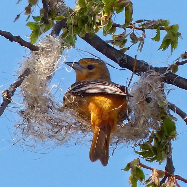 It's not a nest...it's a hammock