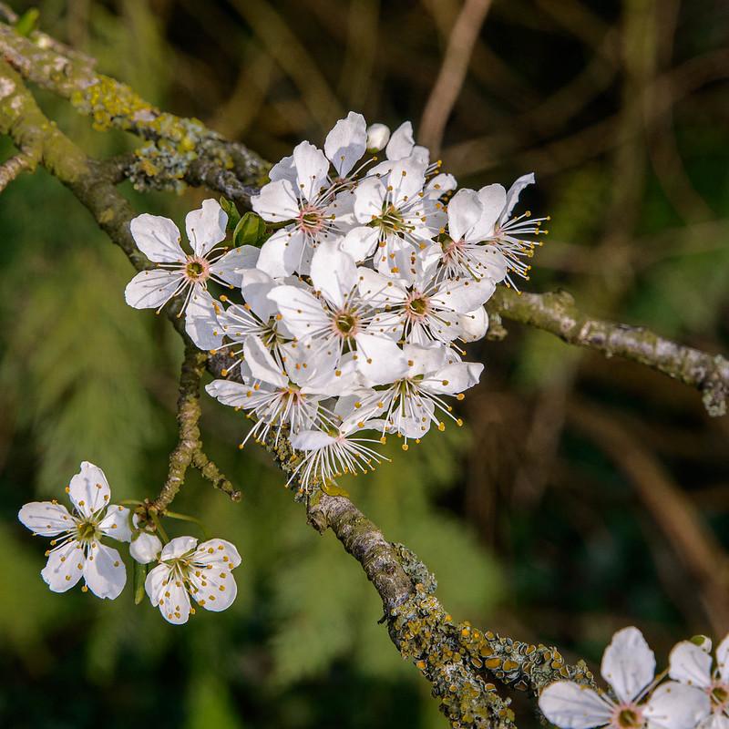 DSC_5683_Blossom_46.jpg