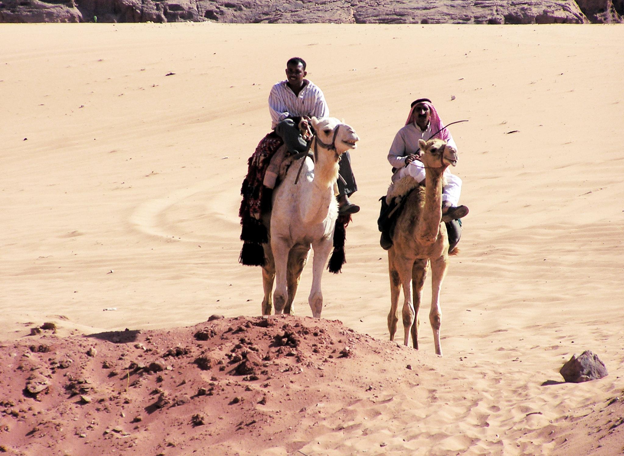 camellos y su gente en el desierto de Jordania
