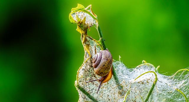 Snail on a Caterpillar Nest