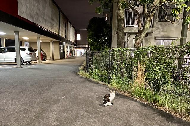 Today's Cat@2021−05−15