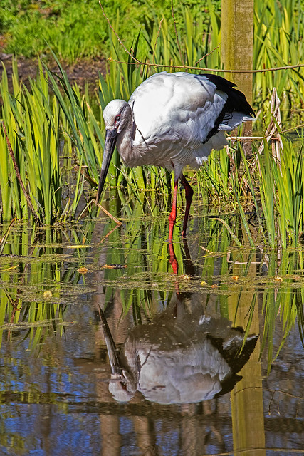 Storch - 20042101