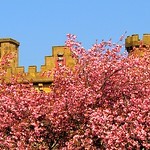 Spring blossom by the castlements