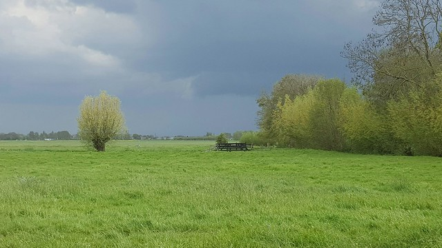 Before the heavy shower