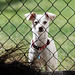 penny_guarding_the_fence-20210514-100
