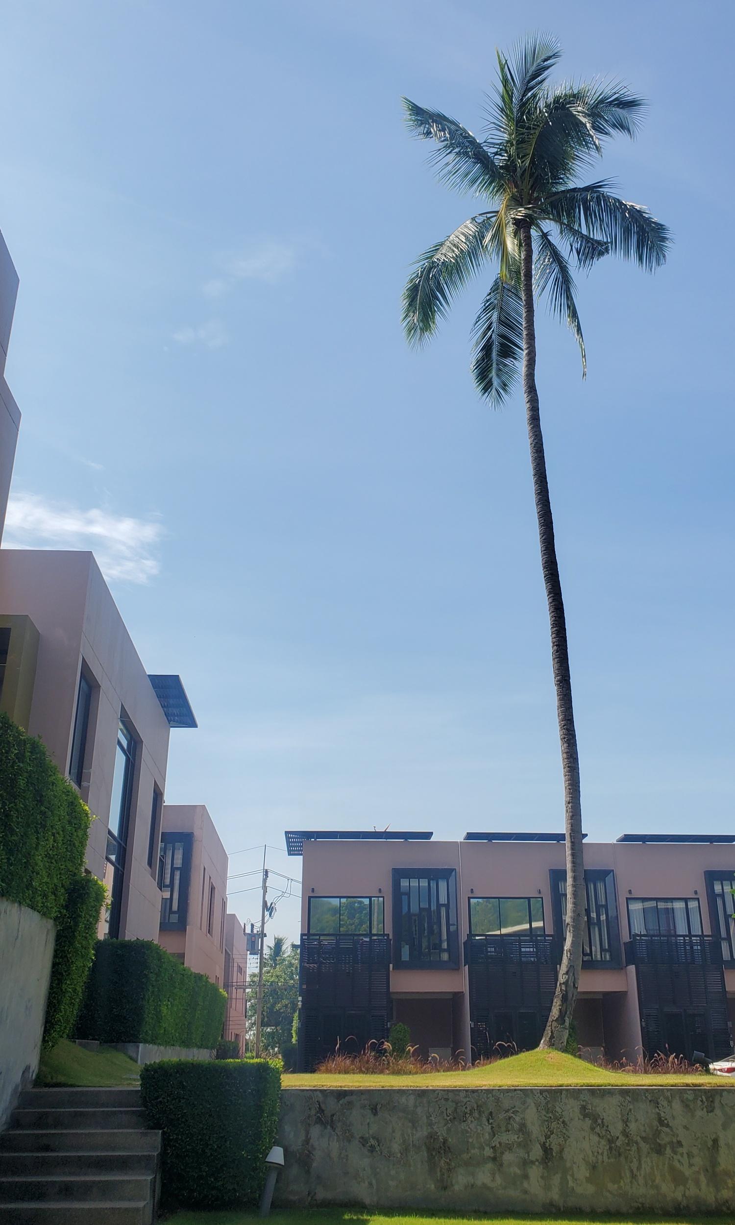 Pause Residences Replay Koh Samui