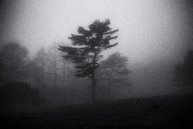 magic fog /16
