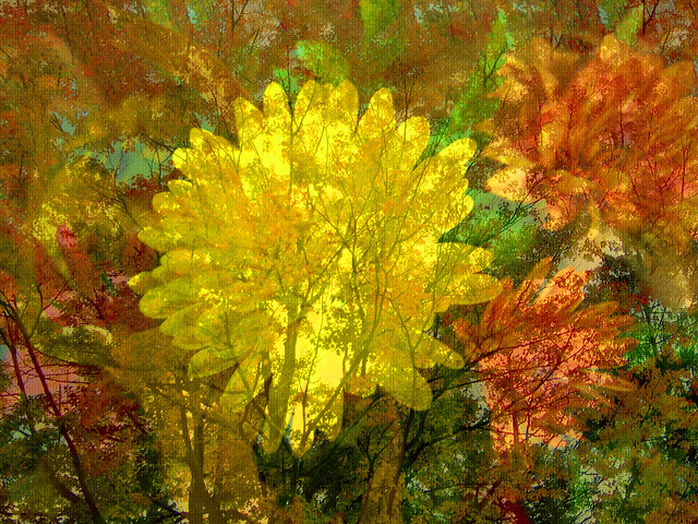 Canvas of Fall Colors