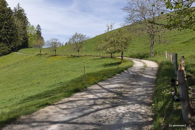 Weg am Frühlingstag