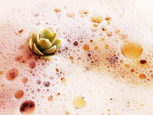Plante grasse sur un tapis de bulles de savon