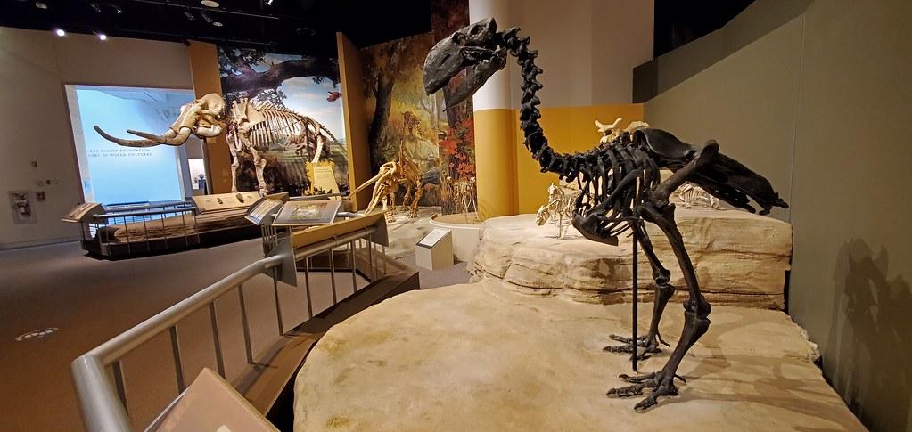 Sam Noble Oklahoma Museum of Natural History