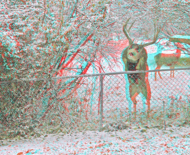 IMG_5268e3-Anaglyph Photo/3D