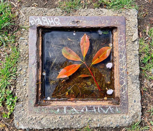 2021 - Vancouver - Framed Wet Leaf Sprig