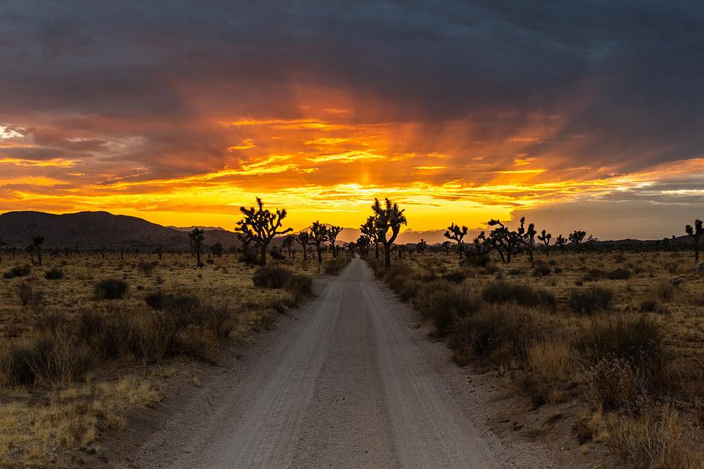 Joshua Tree National Park 5-Day Masterclass July 2021