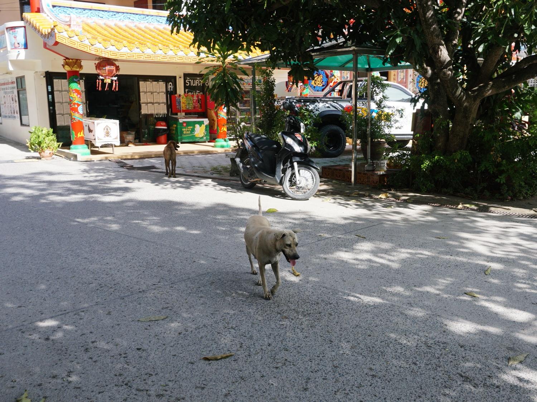 street dogs Koh Samui