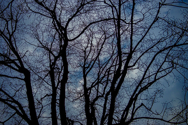 Naked tree (Explored)