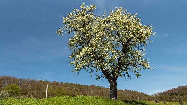 Frühling auf dem Land (1)