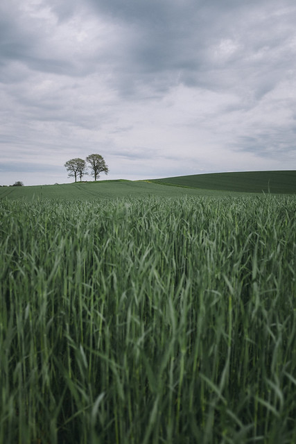 Skåne Fields