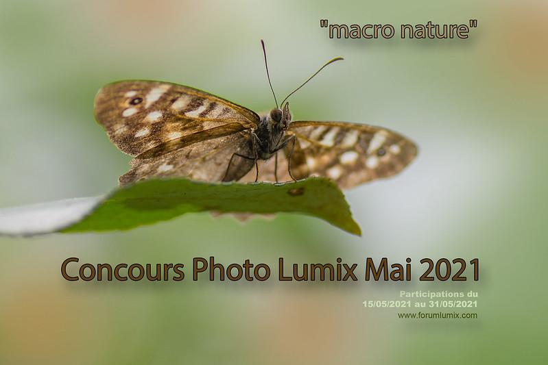 "Concours photos mai 2021 ""Macro Nature"" 51180950438_da99d6c49d_c"