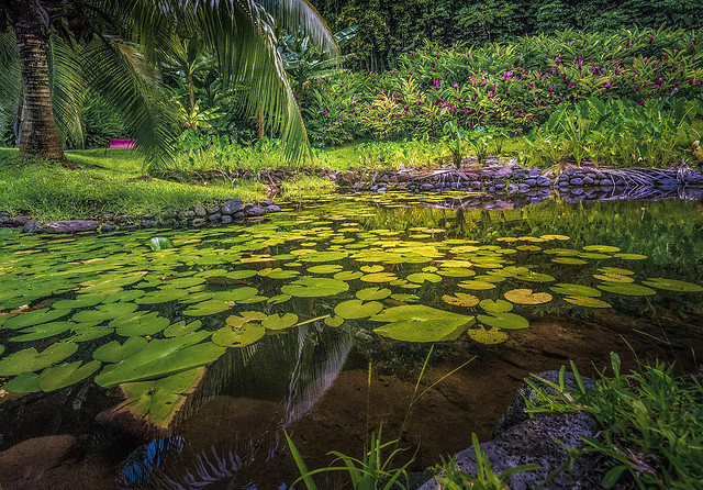 ***Tropical Pond Chilling in Late Afternoon