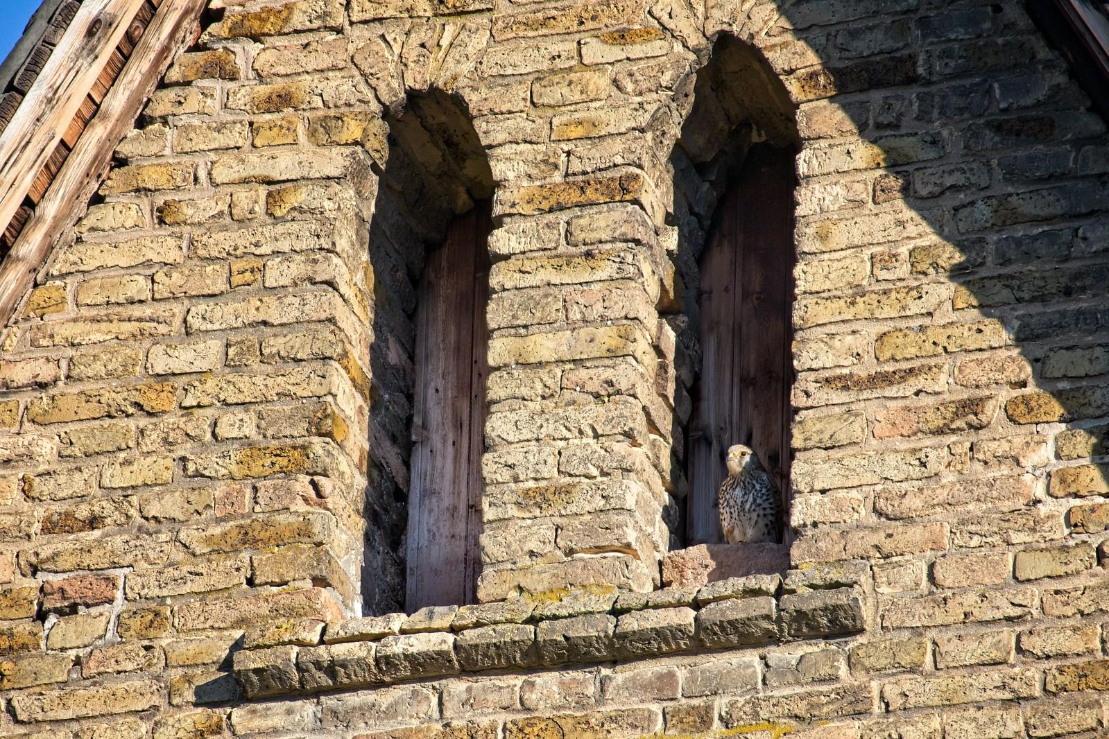 Katholische Kirche Selzen: Turmfalke im Biforium