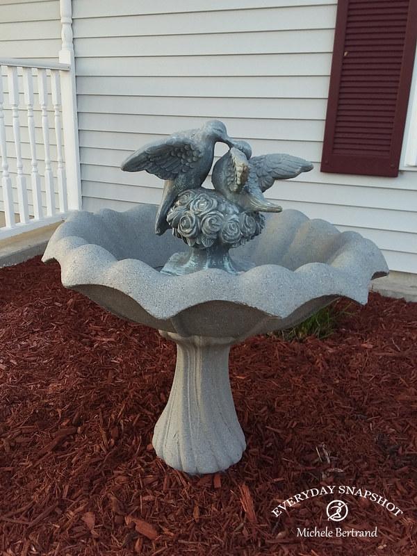 Bird Bath & Turtle Freshen Up