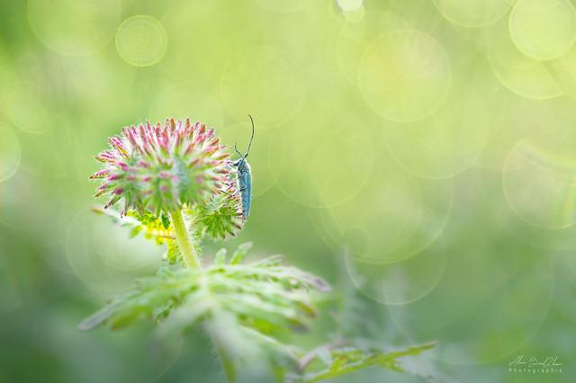 Tiny nature immensity...! - Immensité minuscule nature...!