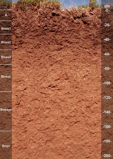 Veleno soil series TX