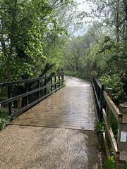 Rainy trail 15MAY2021