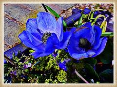 Blue is the colour.......HSS