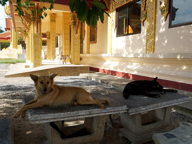 Wat Plai Laem dogs