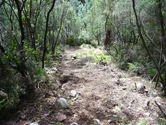 Le sentier en RD du Peralzone à la descente après les travaux