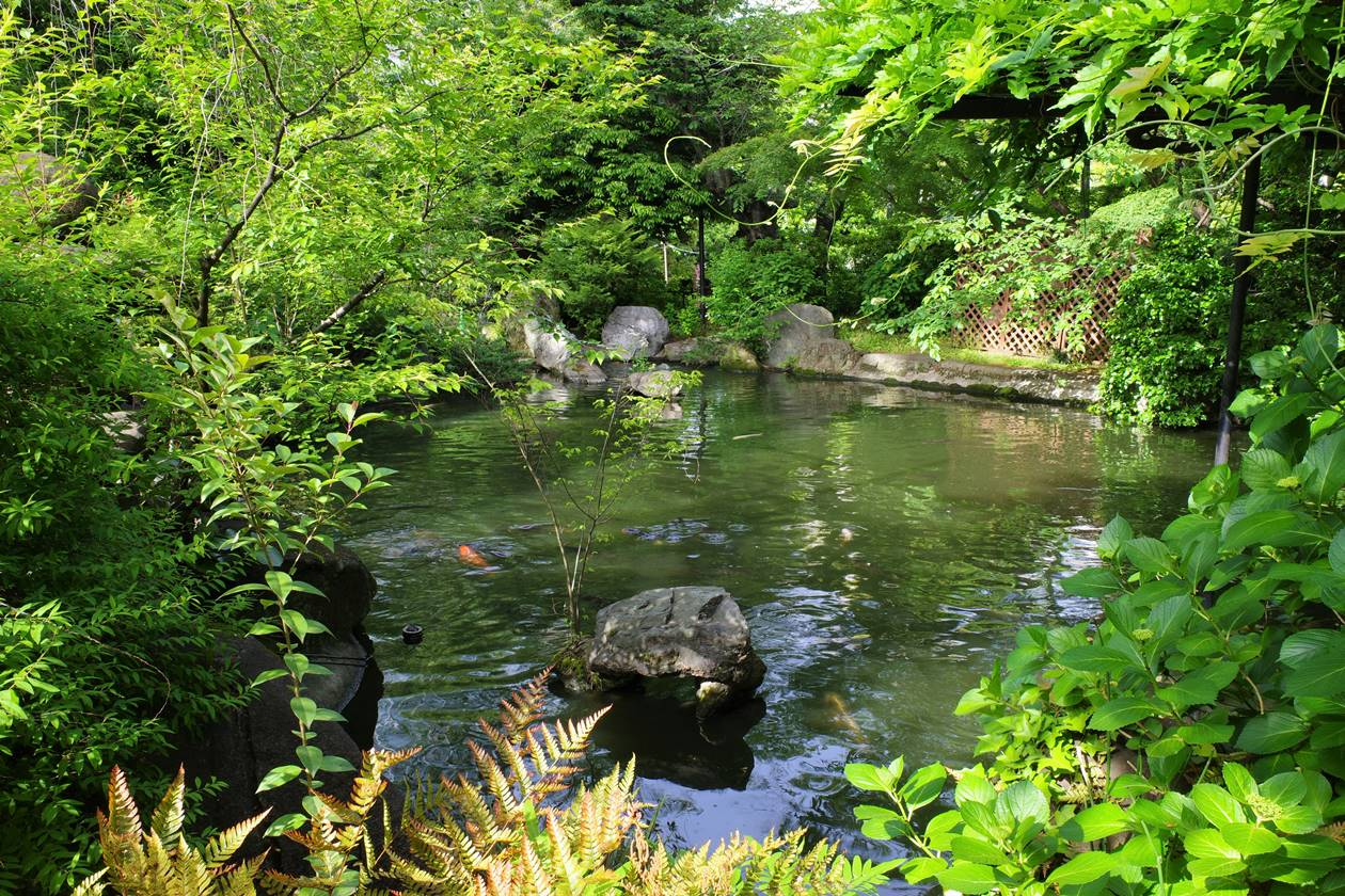 【東京港区】愛宕山の新緑と池