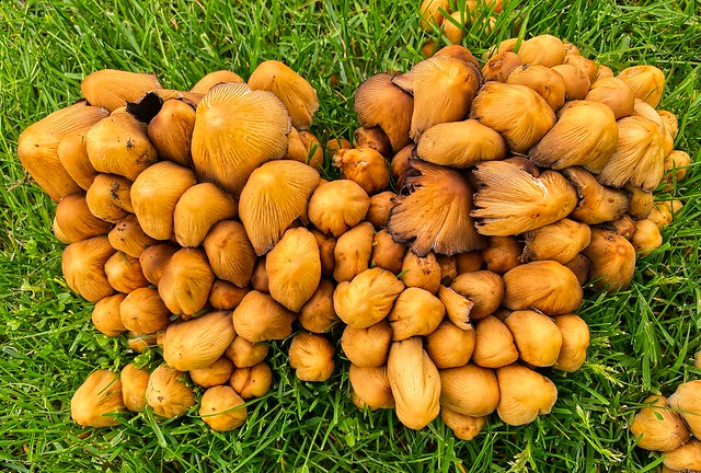 2021 - Vancouver - Mushroom Cluster - 1 of 2
