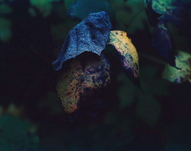 Pentax 67 II: Fuji Velvia Leaf - Decay