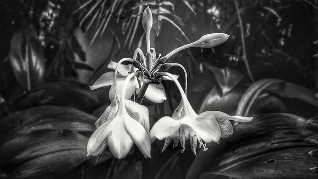 Flores b/w
