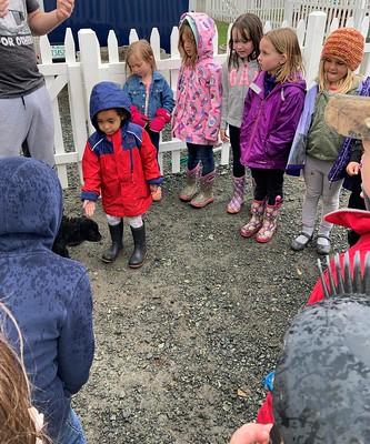 Meeting the lamb