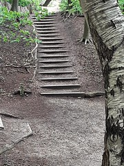 Stairs/Treppe im Wald