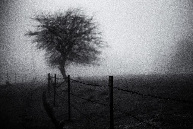magic fog /17
