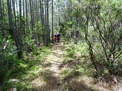 Redescente du chemin en RG de la Figa Bona vers le ruisseau de Peru (partie traitée)