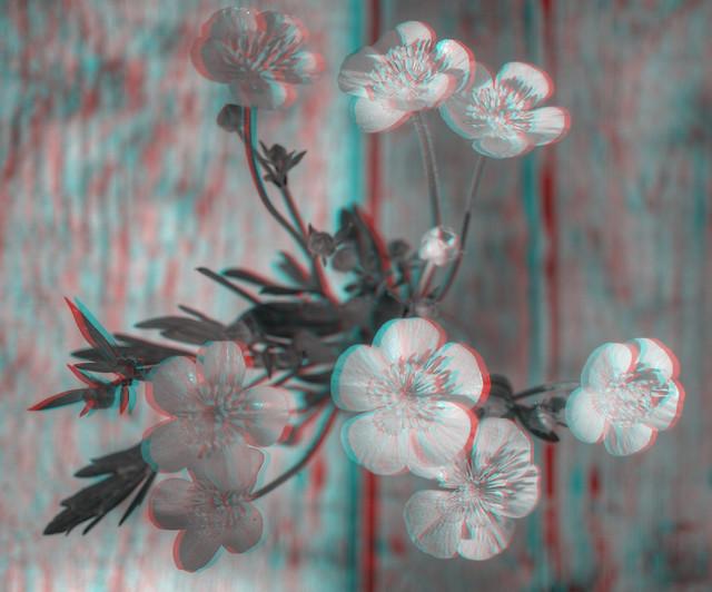 Meadow Buttercup [Ranunculus acris]