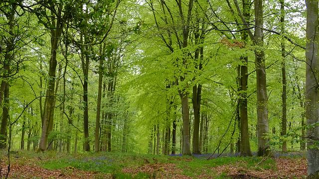 Crosspots Wood.
