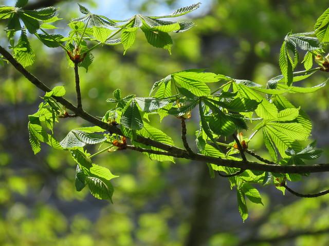 Green-Blue May