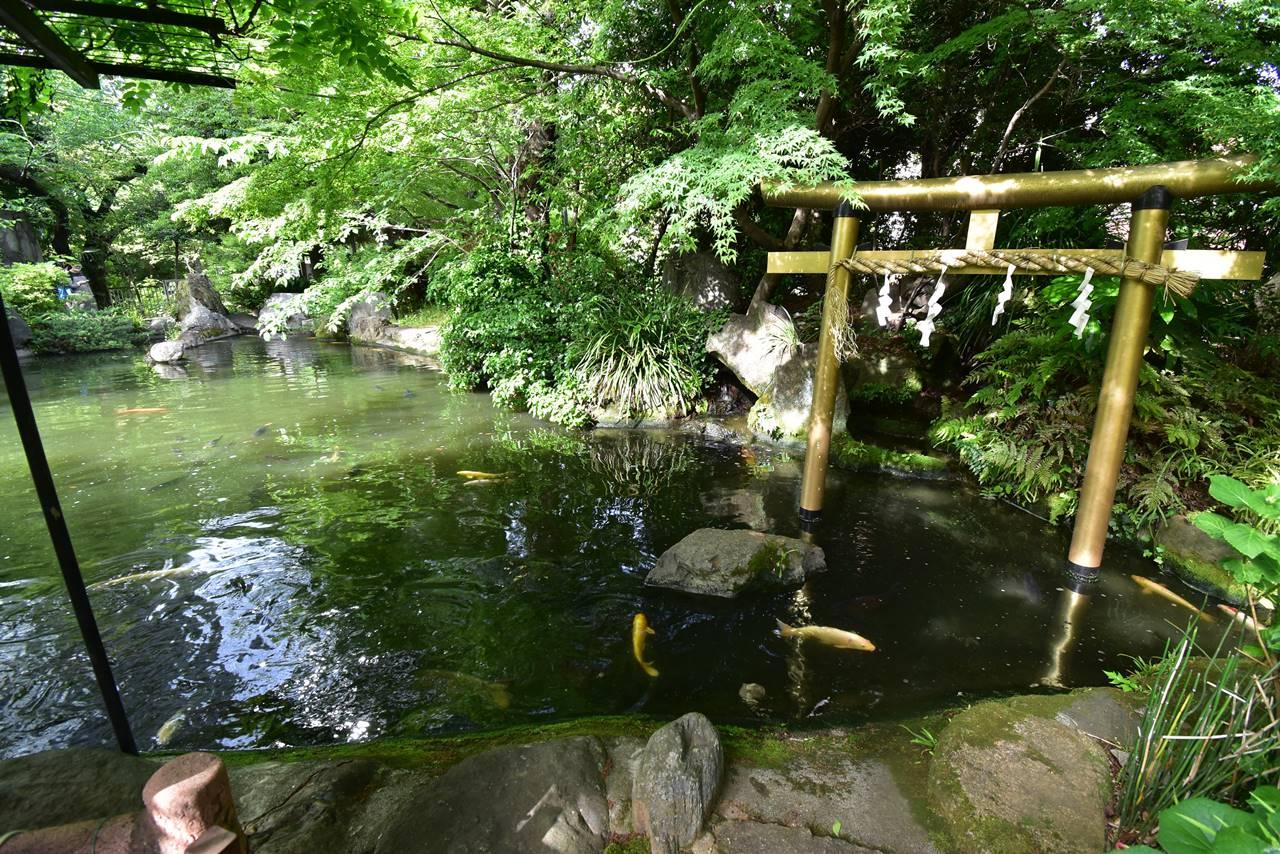 【東京港区】愛宕山の池