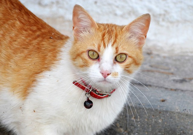 Young cat in Altea - Gatito en Altea (2)