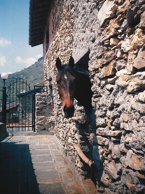 Simpatico cavallo, Triora 1995