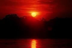 Amazon Rainforest, 2003