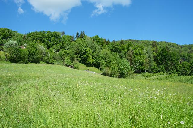 Spring in Schossenriet, Berneck, Switzerland
